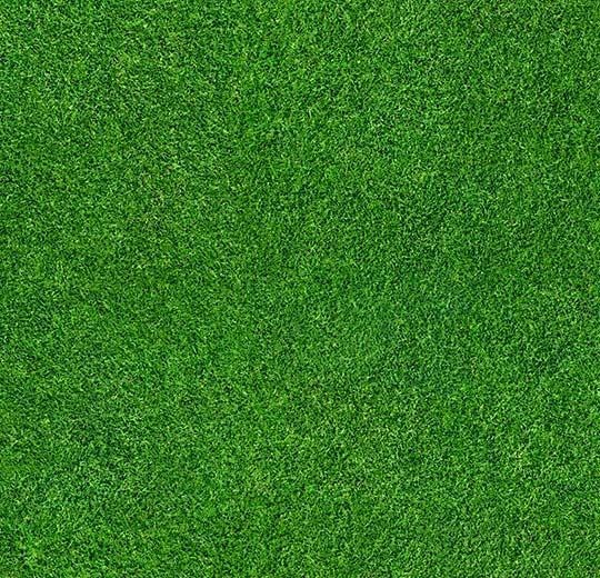 çim desenli halı
