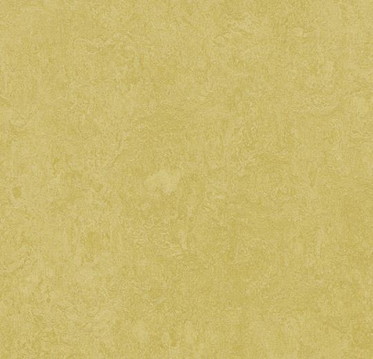 3259-325935 mustard
