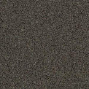 910076 sparrow