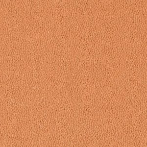 9569 coral