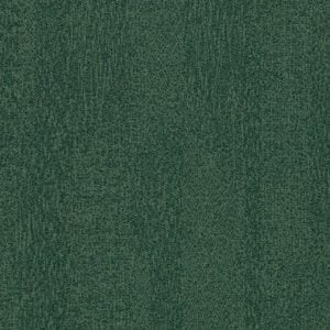s482025-t382025 forest