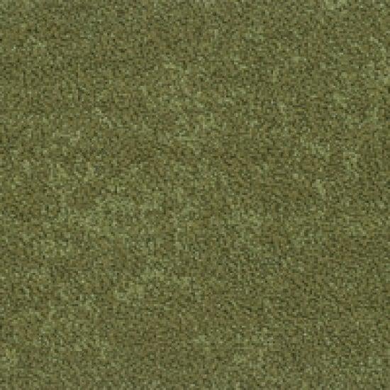 Moss 0244-1