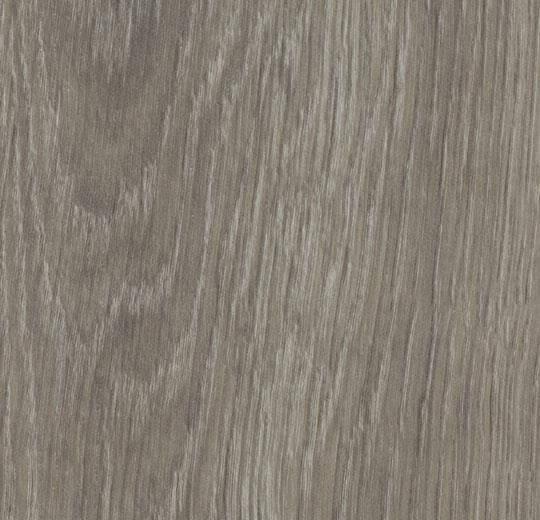 60280CL5 grey giant oak