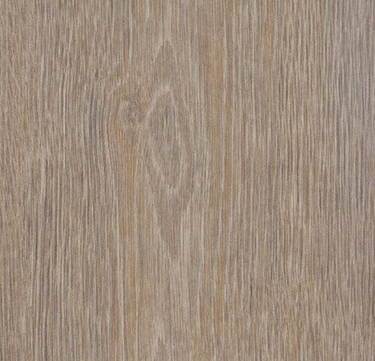 60293CL5 steamed oak
