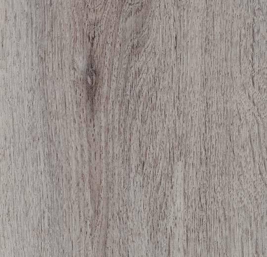 8WHA01-3WHA01 winter harvest oak