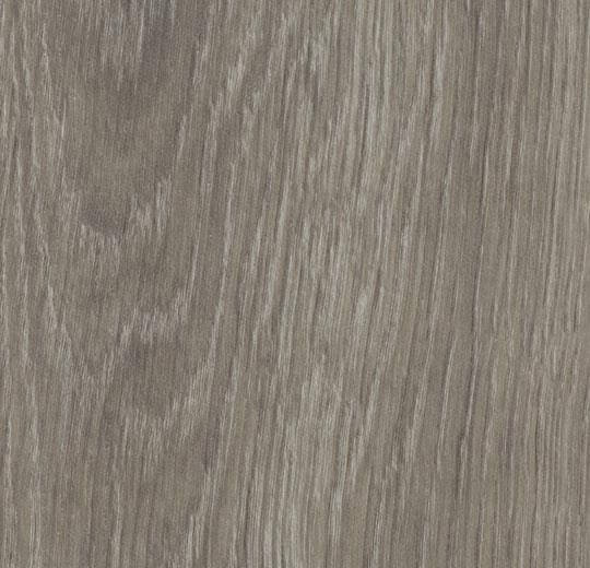 60280PZ7 grey giant oak